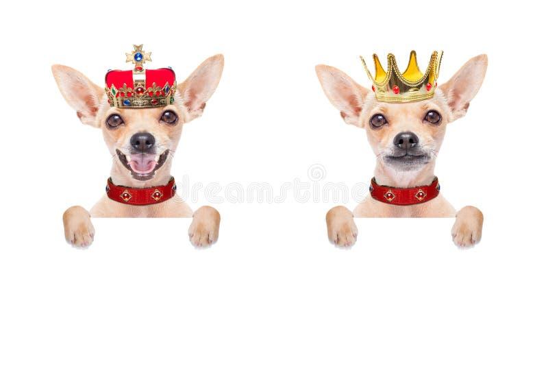 Cane di re della corona fotografie stock