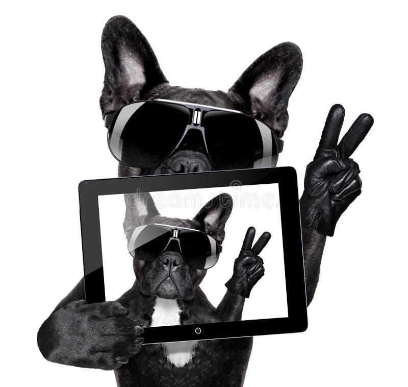 Cane di Selfie immagine stock