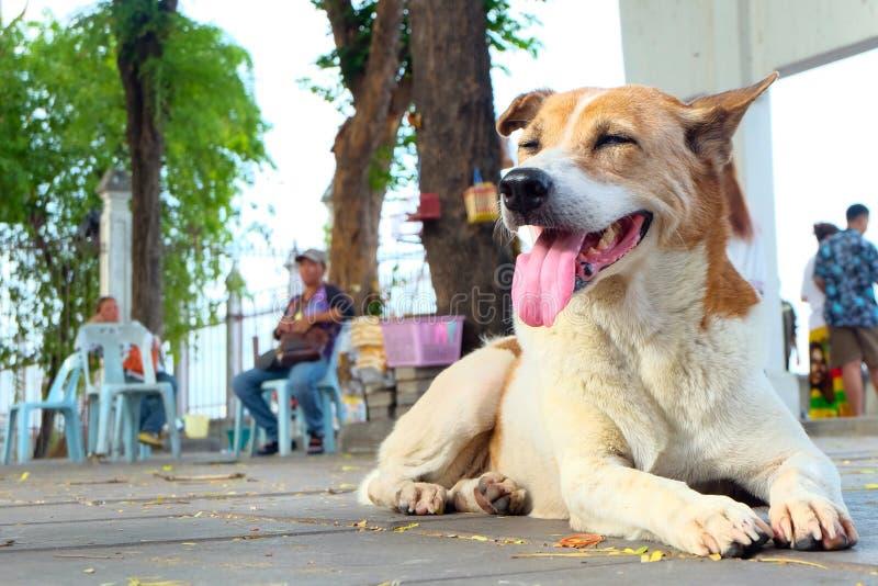 cane di sorriso fotografie stock