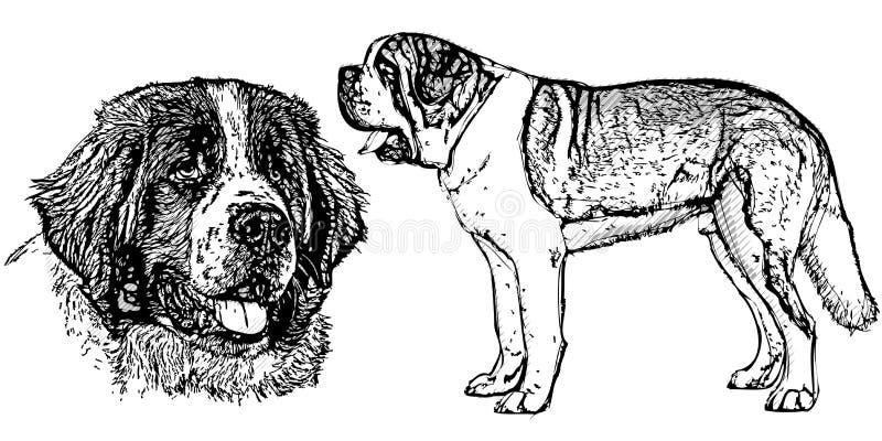 Cane di St Bernard illustrazione di stock