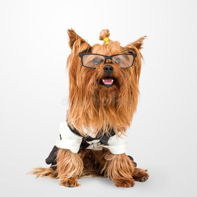 Cane divertente immagini stock libere da diritti