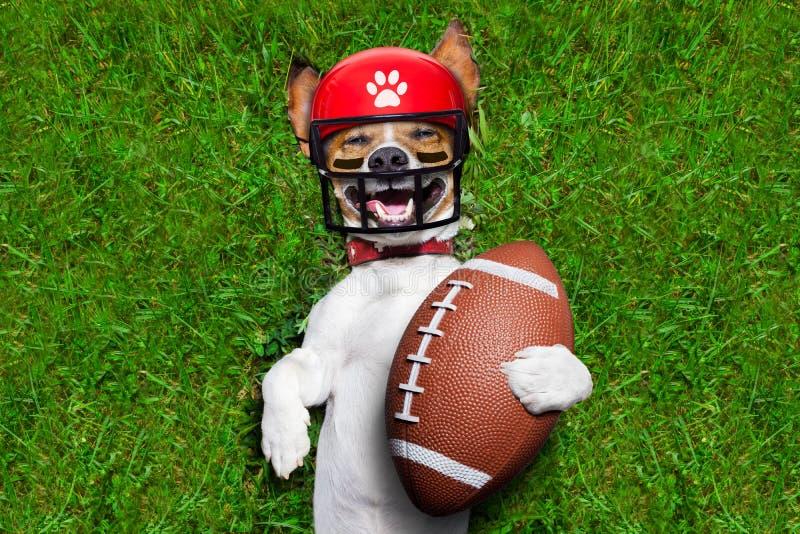Cane divertente di calcio immagini stock libere da diritti