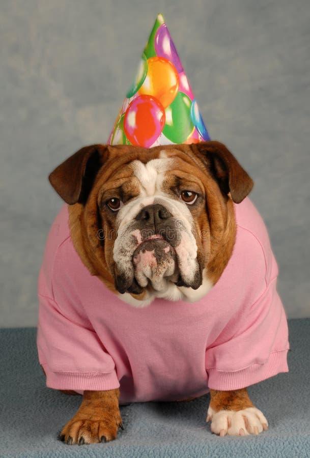 Cane divertente di compleanno fotografia stock libera da diritti