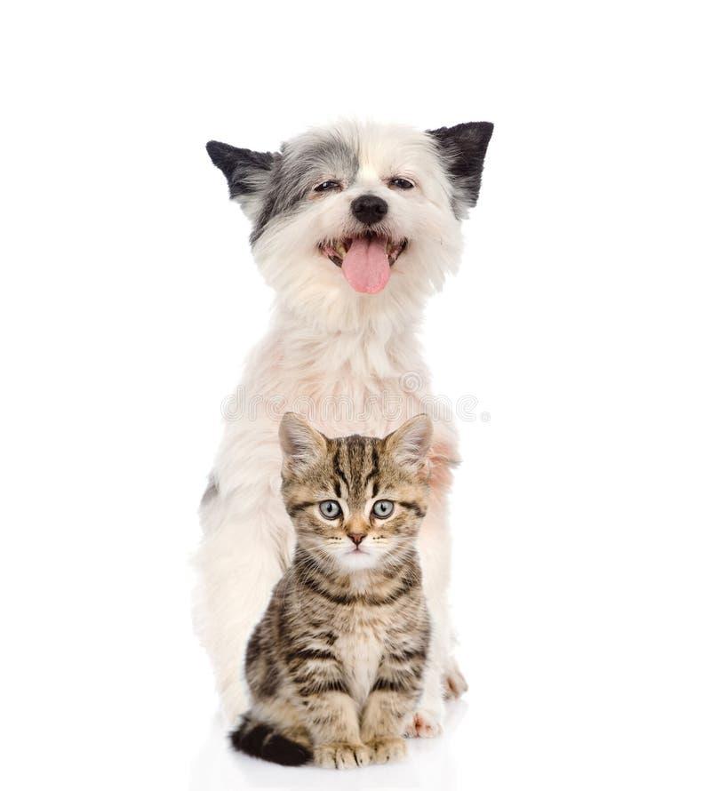 Cane divertente e gattino scozzese esaminando macchina fotografica immagini stock libere da diritti
