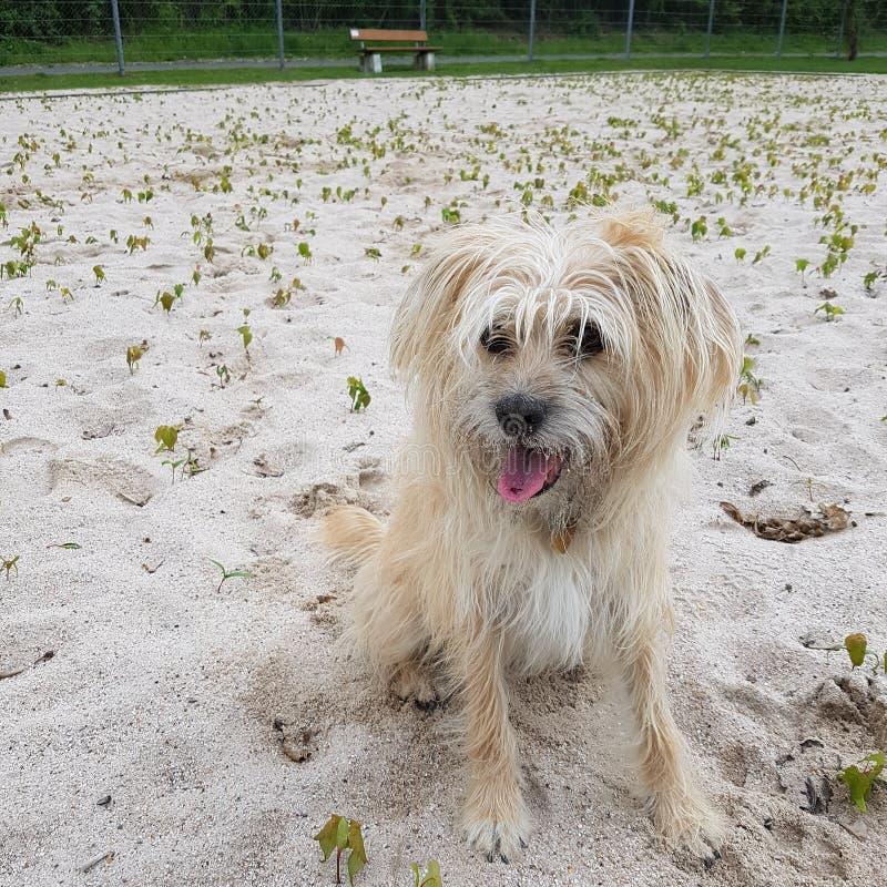 Cane dolce immagini stock libere da diritti