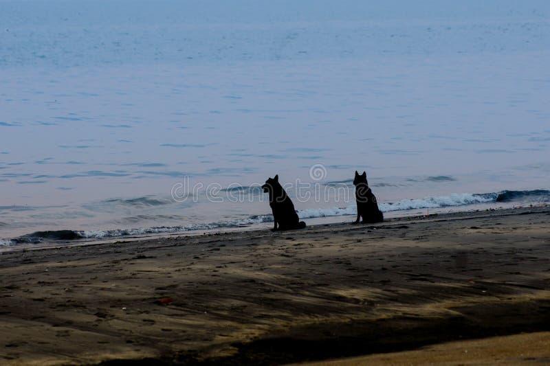 Cane due che esamina il mare in una spiaggia tropicale immagini stock