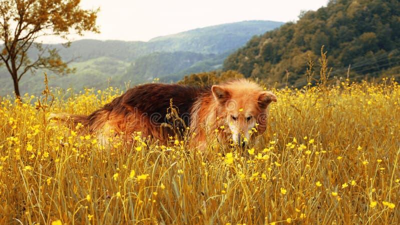 Cane e bei natura e paesaggio immagini stock