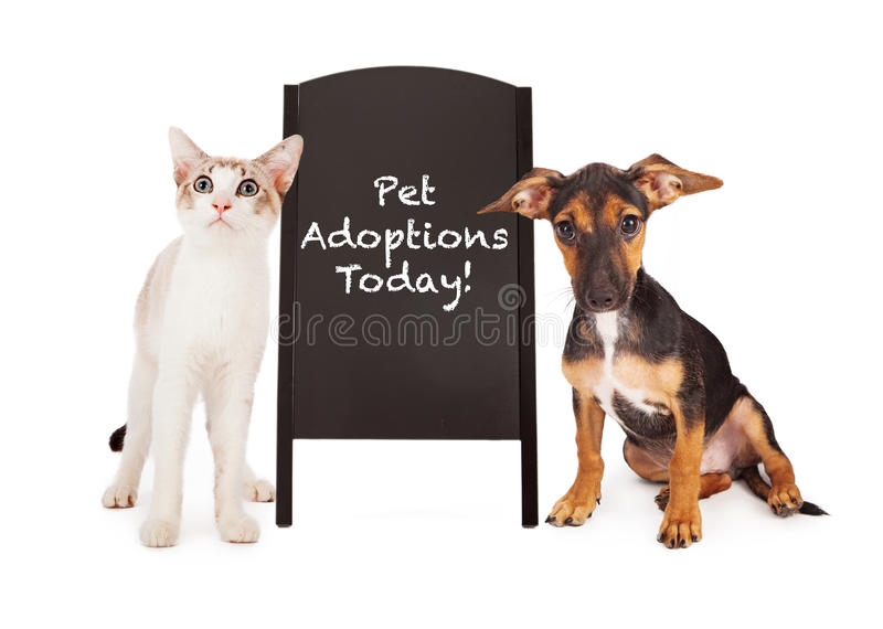 Cane e Cat With Pet Adoption Sign fotografia stock libera da diritti