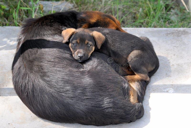 Cane e cucciolo immagine stock