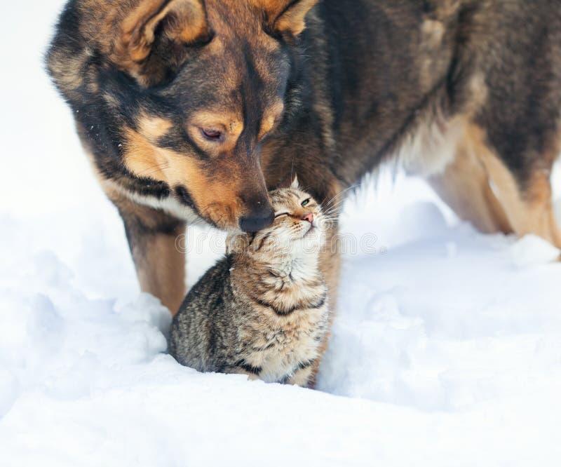 Cane e gatto che giocano nella neve immagini stock libere da diritti