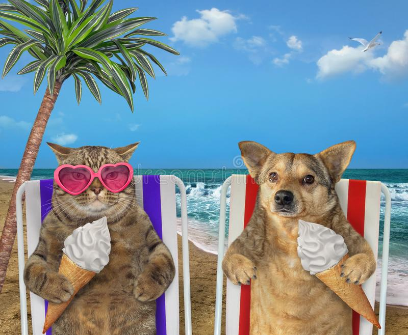 Cane e gatto che mangiano il gelato sotto una palma fotografia stock