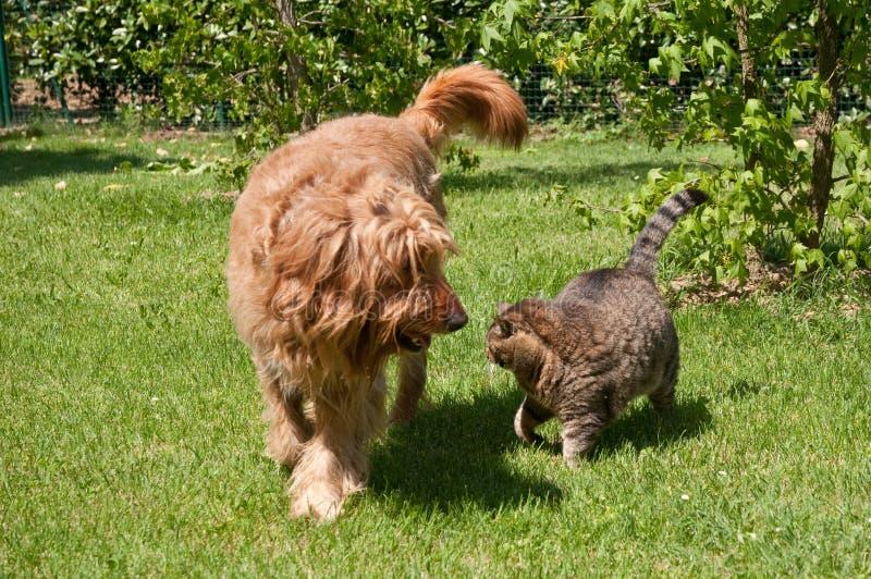 Cane e gatto che passeggiano fotografia stock libera da diritti