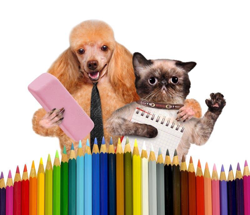 Cane e gatto con i rifornimenti di scuola fotografia stock libera da diritti