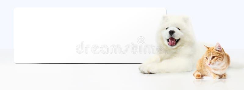 Cane e gatto con l'insegna in bianco isolata su fondo bianco fotografie stock