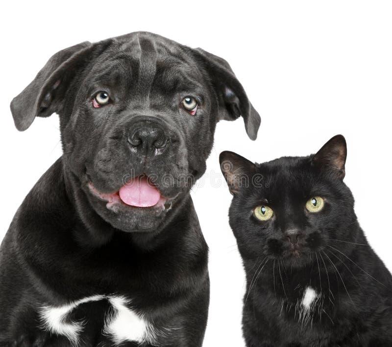 Cane e gatto insieme immagini stock libere da diritti