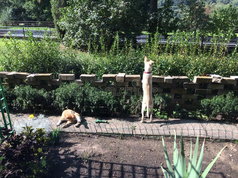 Cane e gatto nell'iarda del giardino immagine stock libera da diritti