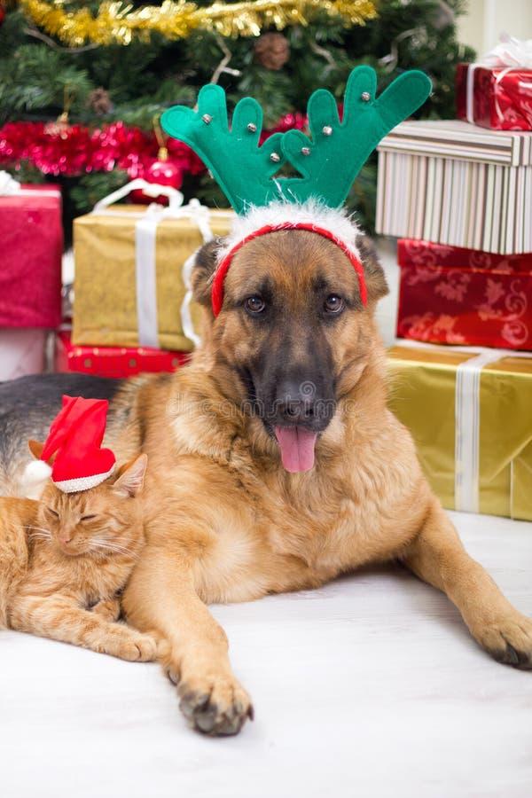 Cane e gatto nella notte di Natale fotografia stock libera da diritti