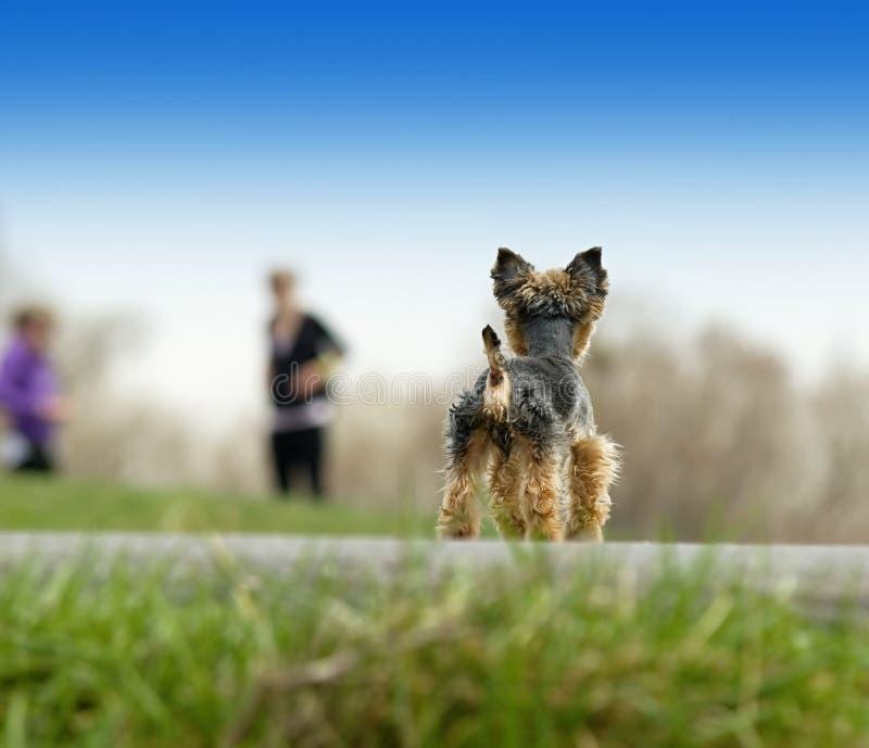 Cane e la gente del cucciolo immagini stock libere da diritti