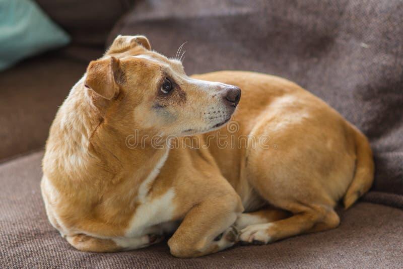 Cane e la sua età fotografie stock libere da diritti