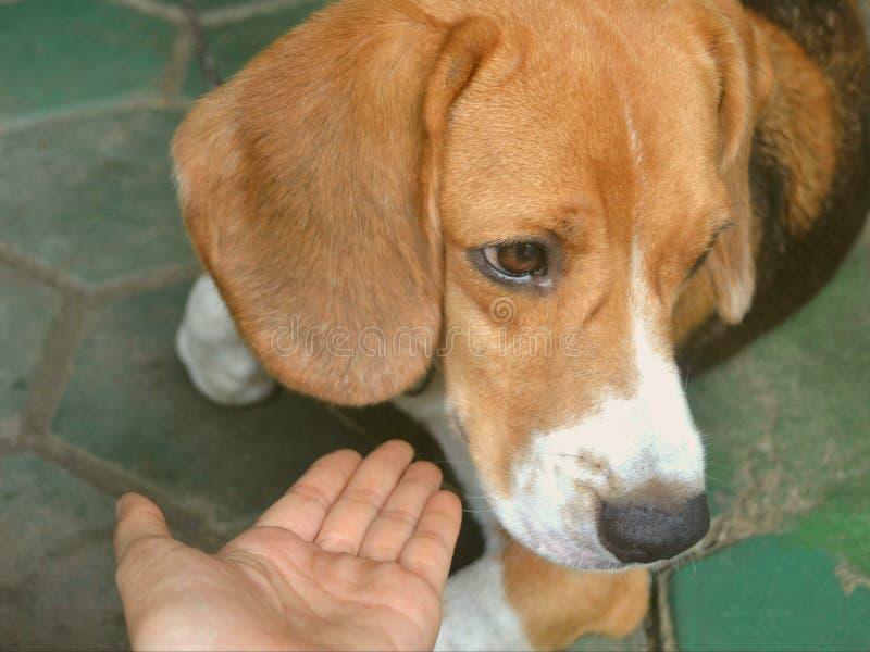 Cane e mano amorosa del proprietario fotografia stock