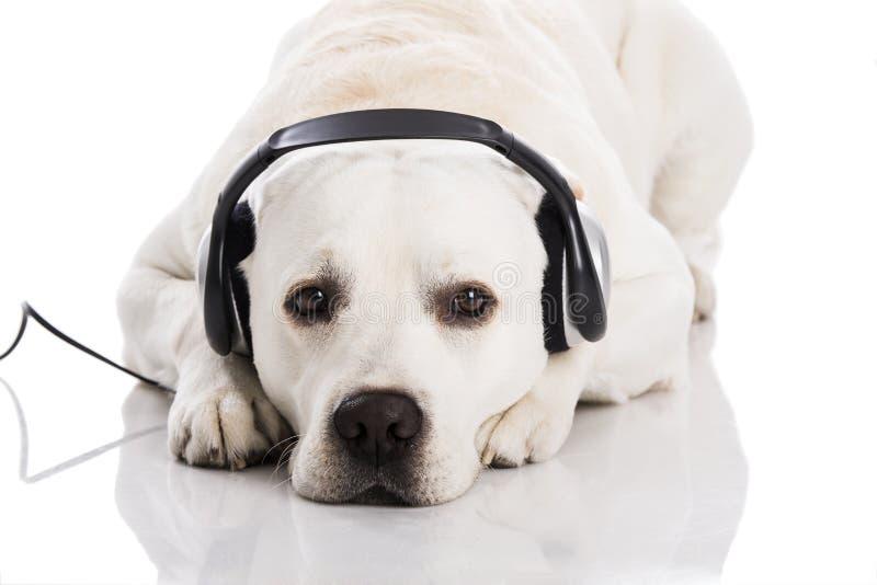 Cane e musica fotografia stock