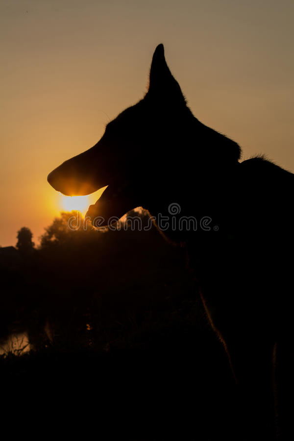Cane e tramonto immagini stock libere da diritti