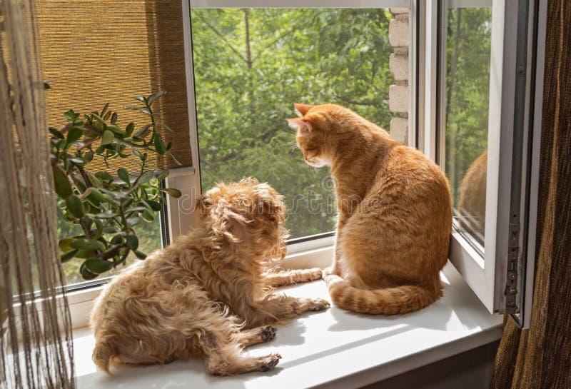 Cane ed il gatto sulla finestra fotografia stock