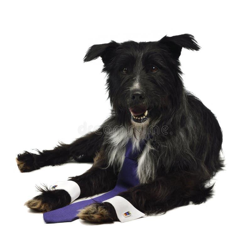 Cane elegante con il legame fotografia stock libera da diritti