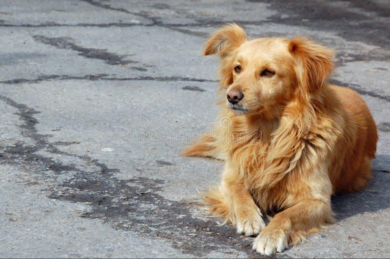 Cane esterno rosso immagini stock libere da diritti