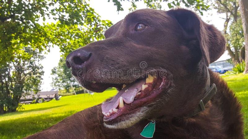 Cane felice immagini stock libere da diritti
