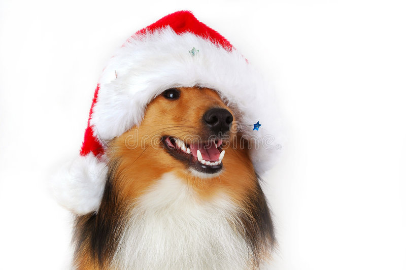 Cane felice di natale fotografie stock