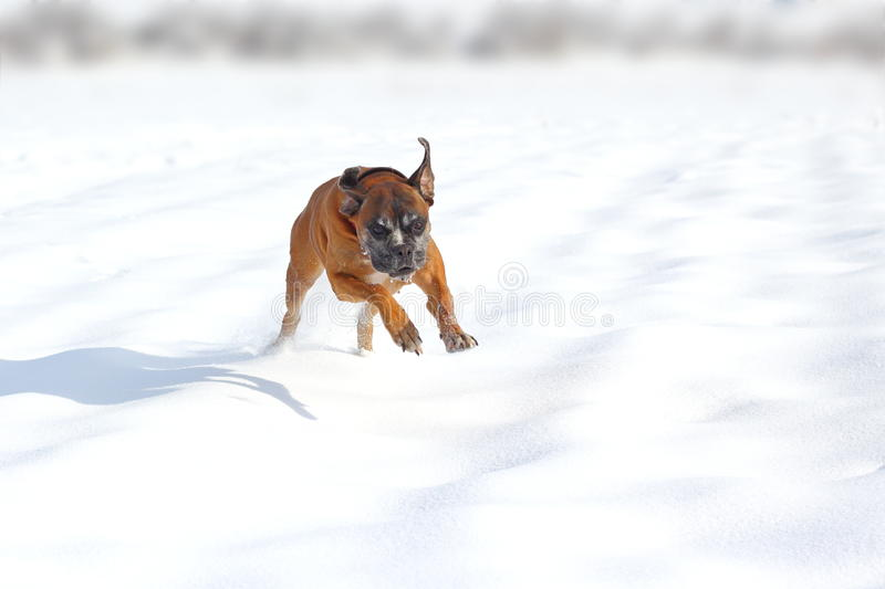 Cane felice in neve fotografia stock libera da diritti