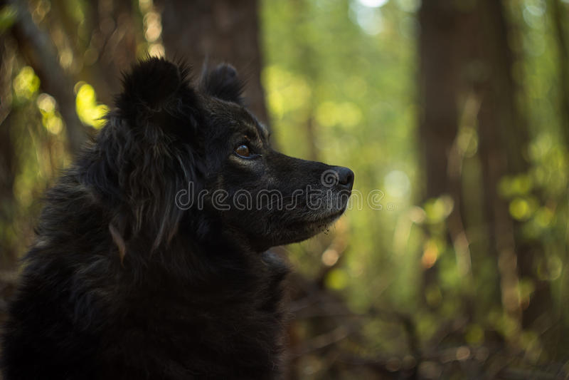 Cane in foresta immagini stock