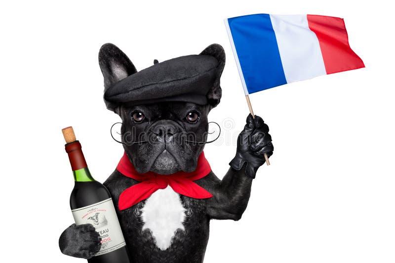 Cane francese fotografia stock