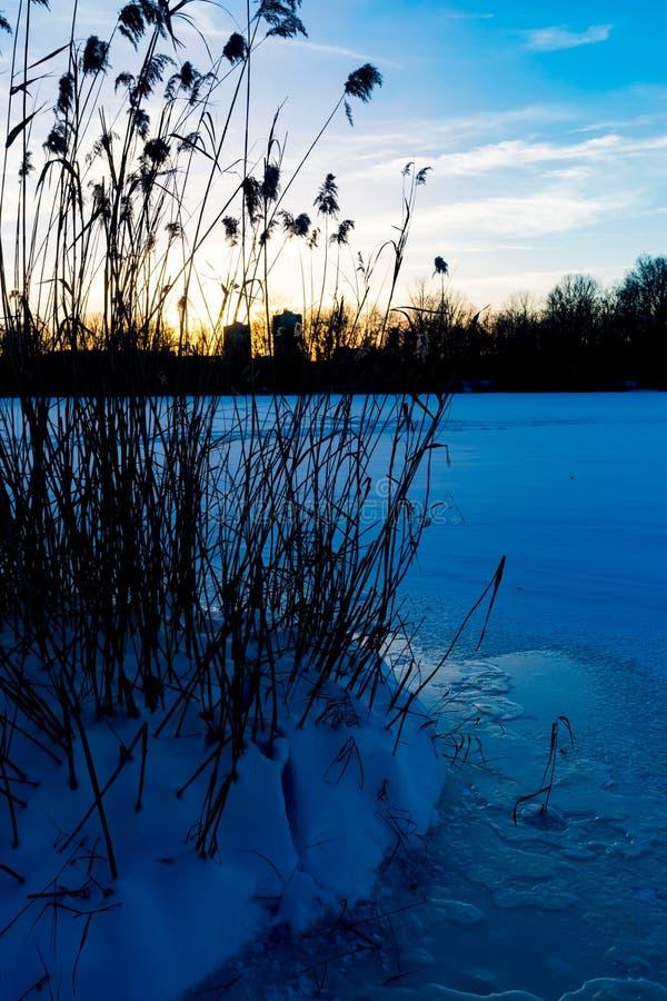 Download Cane on frozen river stock image. Image of landscape - 86263169