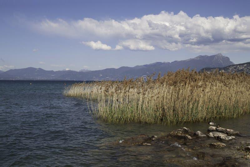 Cane in Garda lake, Italy. During sunny day royalty free stock image
