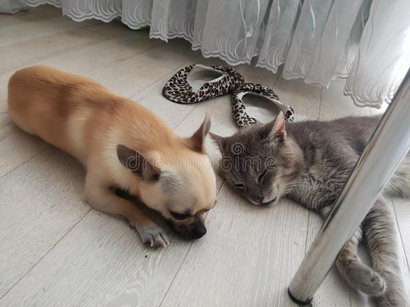 Cane & gatto fotografia stock libera da diritti