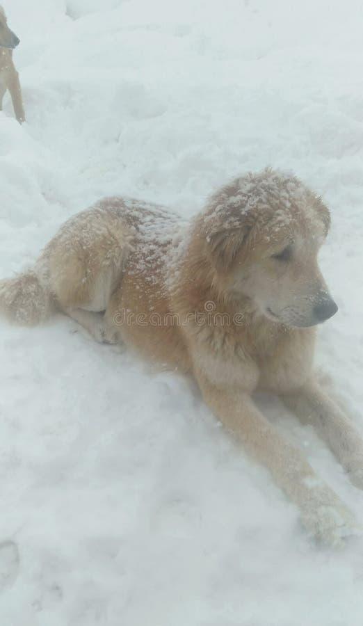 Cane in ghiaccio fotografia stock