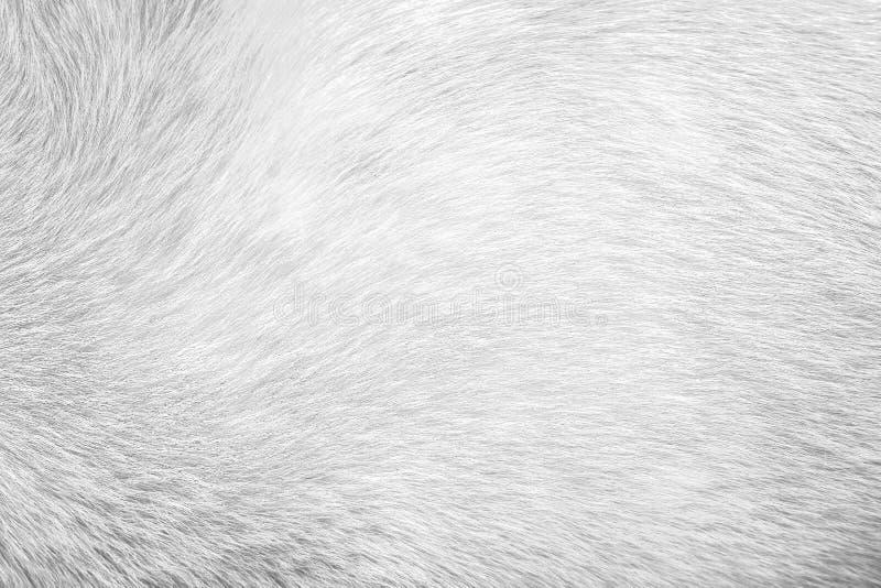 Cane grigio della pelliccia di struttura per fondo, pelle animale naturale dei modelli immagini stock libere da diritti