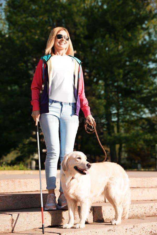 Cane guida che aiuta persona cieca con la canna lunga che scende le scale fotografia stock libera da diritti