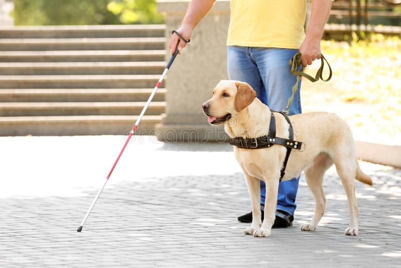 Cane guida che aiuta uomo cieco fotografie stock