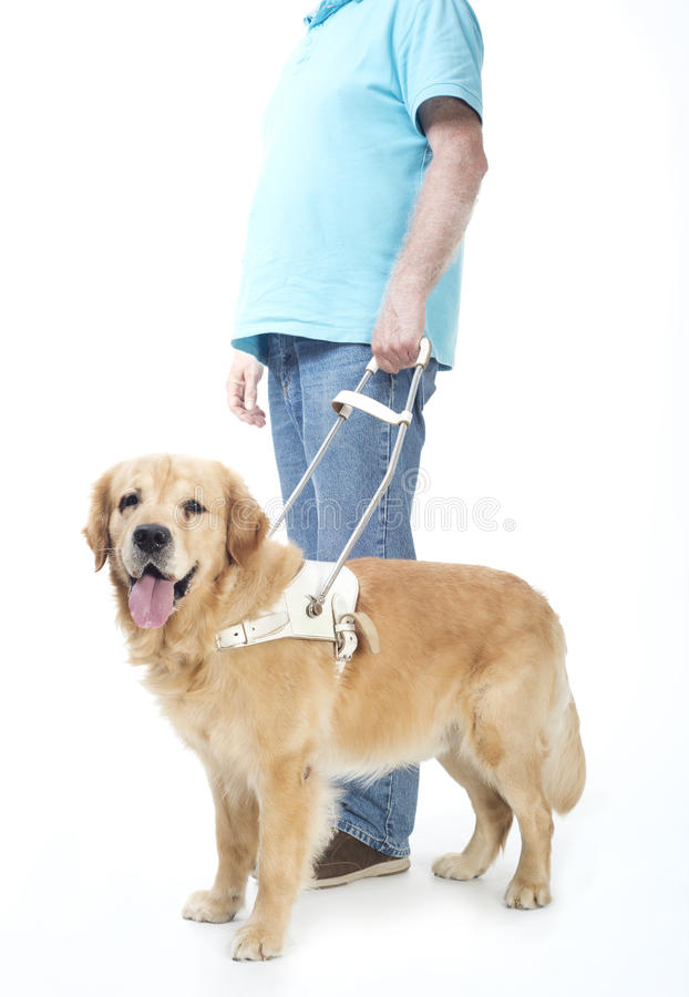 Cane guida isolato su bianco fotografie stock