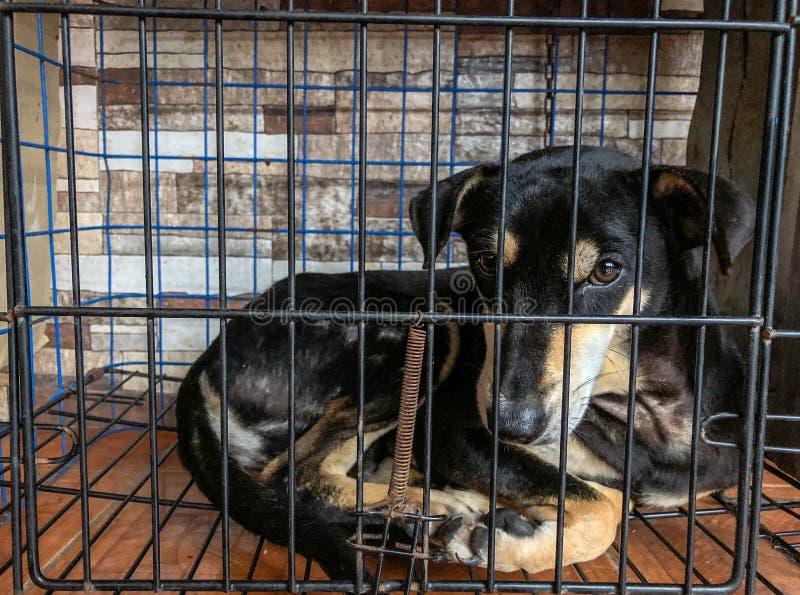 Cane innocente in gabbia immagini stock libere da diritti