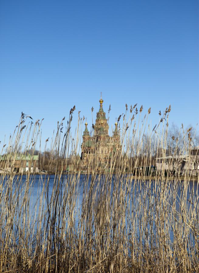 Cane at the lake and St. Peter and Paul Cathedral on a background, the suburb of St. Petersburg, Russia royalty free stock images