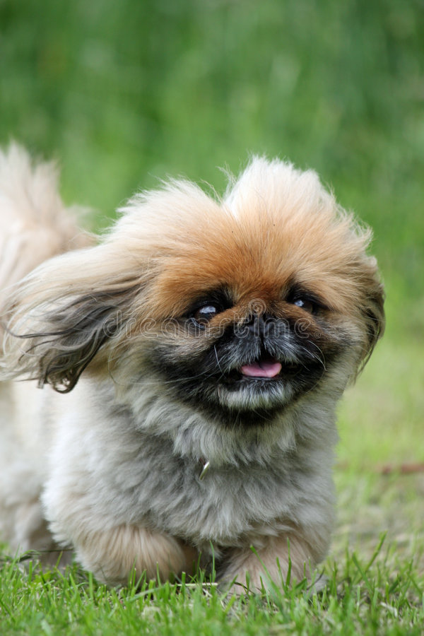 Cane lanuginoso sveglio immagini stock