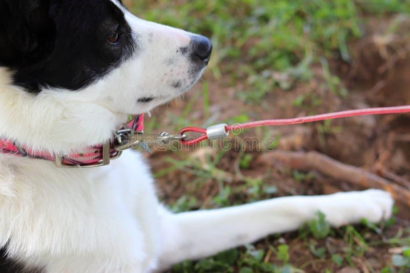 Cane lasciato da solo fuori su un guinzaglio fotografia stock libera da diritti