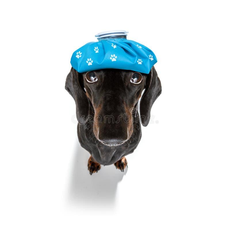 Cane malato malato con la malattia fotografie stock