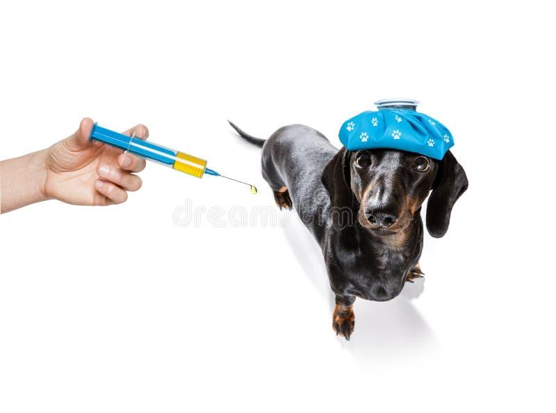 Cane malato malato con la malattia fotografia stock