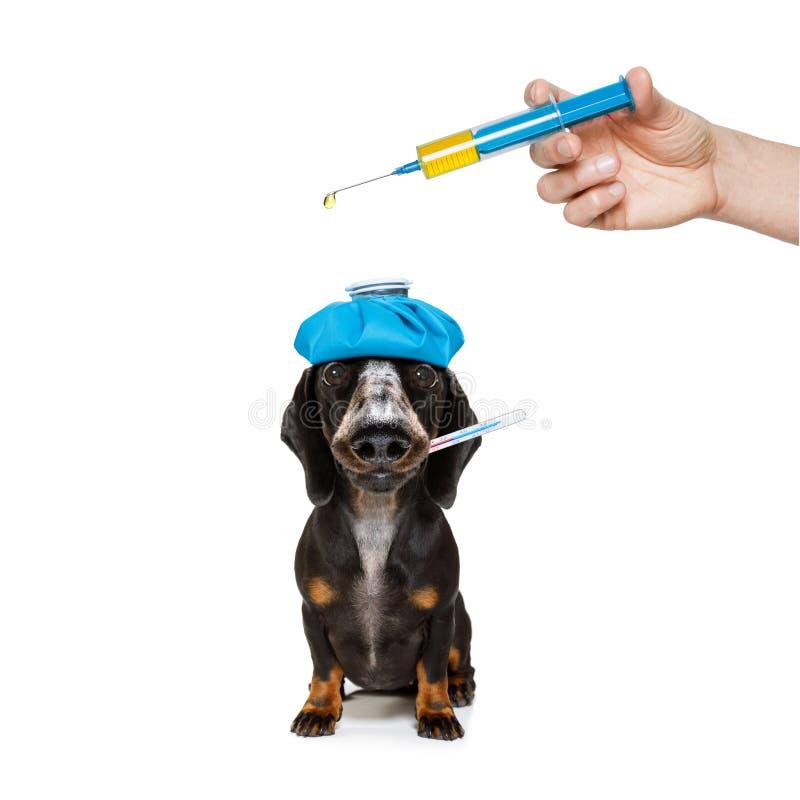 Cane malato malato con la malattia immagini stock