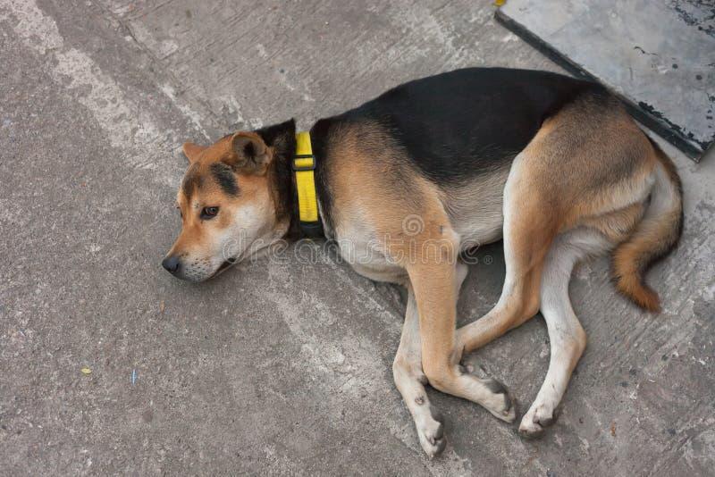 Cane malato solo sulla via immagini stock libere da diritti